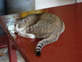 Cats of Houtong, #8902