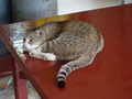Cats of Houtong, #8903