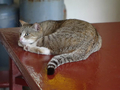 Cats of Houtong, #8906
