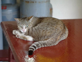 Cats of Houtong, #8907