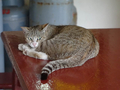 Cats of Houtong, #8908