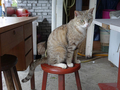 Cats of Houtong, #8912