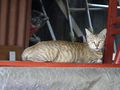 Cats of Houtong, #8913