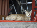 Cats of Houtong, #8914