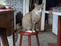 Cats of Houtong, #8917