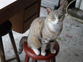 Cats of Houtong, #8919