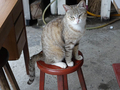 Cats of Houtong, #8921