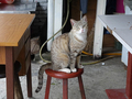 Cats of Houtong, #8922