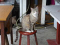 Cats of Houtong, #8923