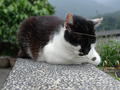 Cats of Houtong, #8927