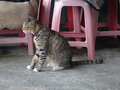 Cats of Houtong, #8929