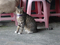 Cats of Houtong, #8930