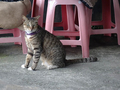 Cats of Houtong, #8931