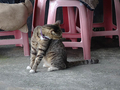Cats of Houtong, #8932