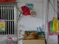 Cats of Houtong, #8933