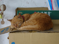 Cats of Houtong, #8935