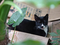 Cats of Houtong, #8936