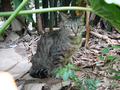 Cats of Houtong, #8938