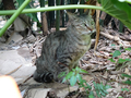 Cats of Houtong, #8939