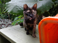 Cats of Houtong, #8940