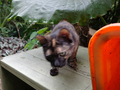Cats of Houtong, #8941