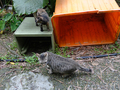 Cats of Houtong, #8943