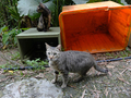 Cats of Houtong, #8944