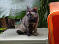 Cats of Houtong, #8945