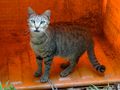 Cats of Houtong, #8946