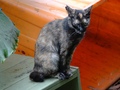 Cats of Houtong, #8948