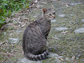 Cats of Houtong, #8950