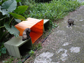 Cats of Houtong, #8951