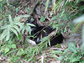 Cats of Houtong, #8956