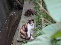 Cats of Houtong, #8957