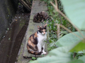 Cats of Houtong, #8958