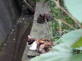 Cats of Houtong, #8959