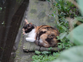 Cats of Houtong, #8960