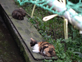 Cats of Houtong, #8963