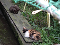 Cats of Houtong, #8964