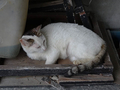 Cats of Houtong, #8972