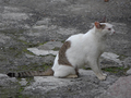 Cats of Houtong, #8979