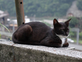 Cats of Houtong, #8982