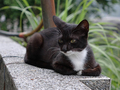 Cats of Houtong, #8985