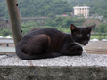 Cats of Houtong, #8986