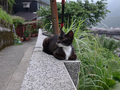 Cats of Houtong, #8988