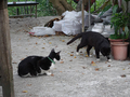 Cats of Houtong, #9000