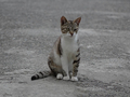 Cats of Houtong, #9001