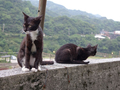 Cats of Houtong, #9010