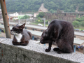 Cats of Houtong, #9024