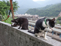 Cats of Houtong, #9025
